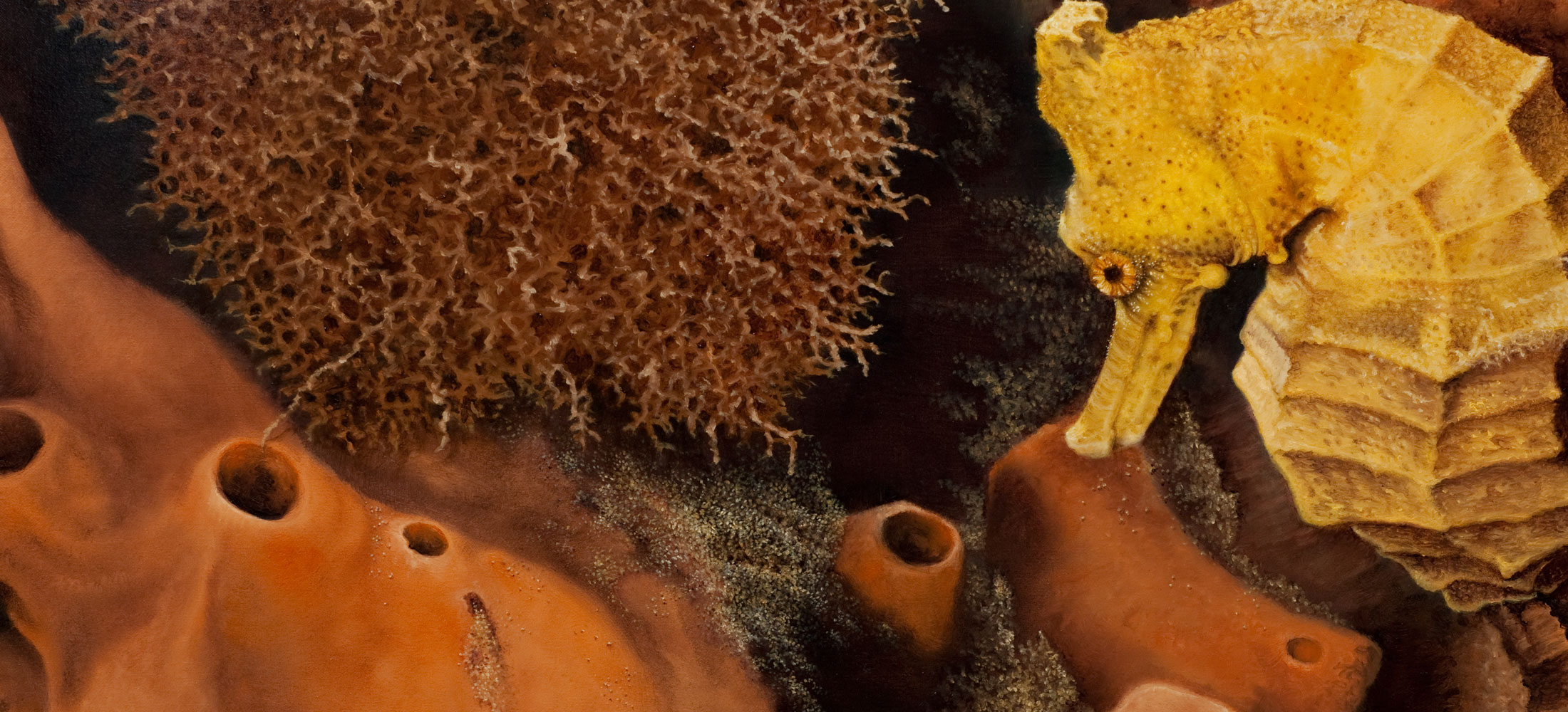 Golden Longnose Seahorse