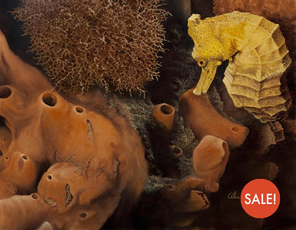 seahorse-sale