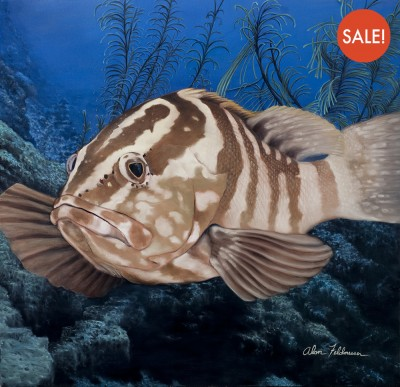 grouper-sale