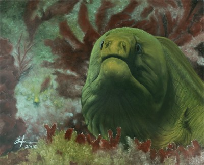 green_moray_eel